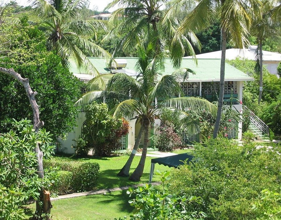 Exterior Garden Grounds Tropical tree grass property plant botany Resort arecales botanical garden green flower landscape architect yard backyard Jungle lawn lush