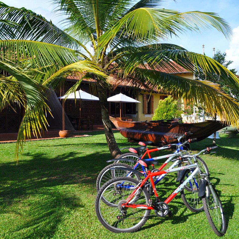 Exterior Garden Grounds Tropical grass bicycle tree parked leisure palm arecales vehicle plant Resort endurance sports lawn
