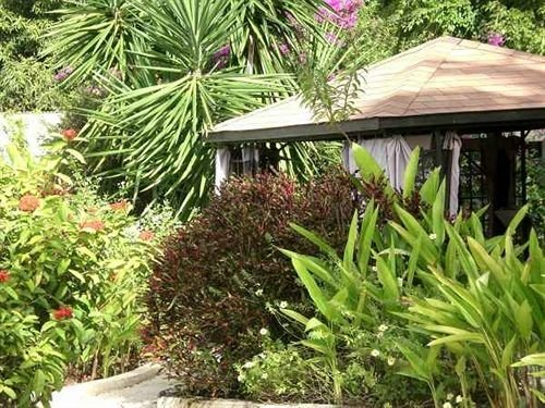 Exterior Garden Grounds Tropical tree plant property yard backyard lawn arecales flower landscaping landscape architect outdoor structure cottage Resort palm bushes vegetable surrounded