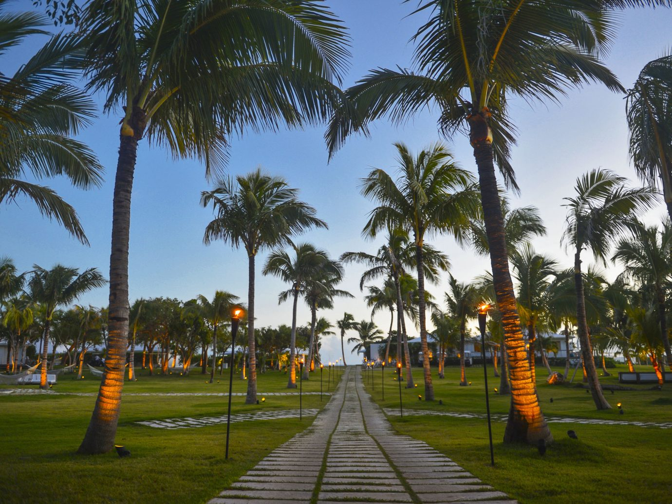 Hotels Romance tree palm grass sky outdoor plant palm family vacation arecales Beach woody plant walkway lined Resort flower