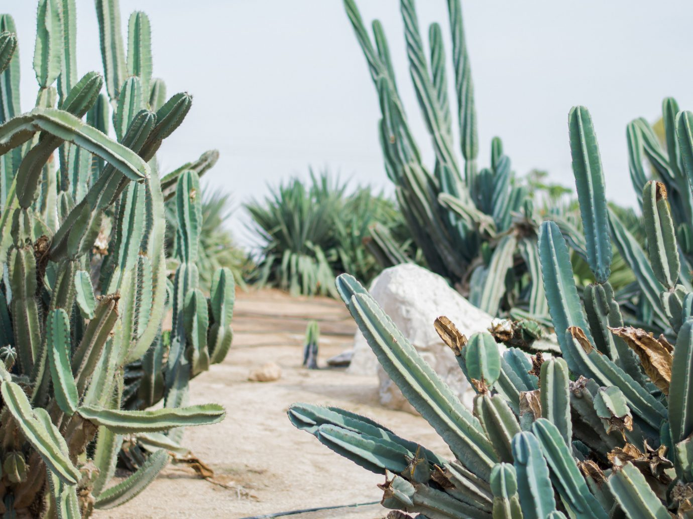 Cacti outside L'Horizon