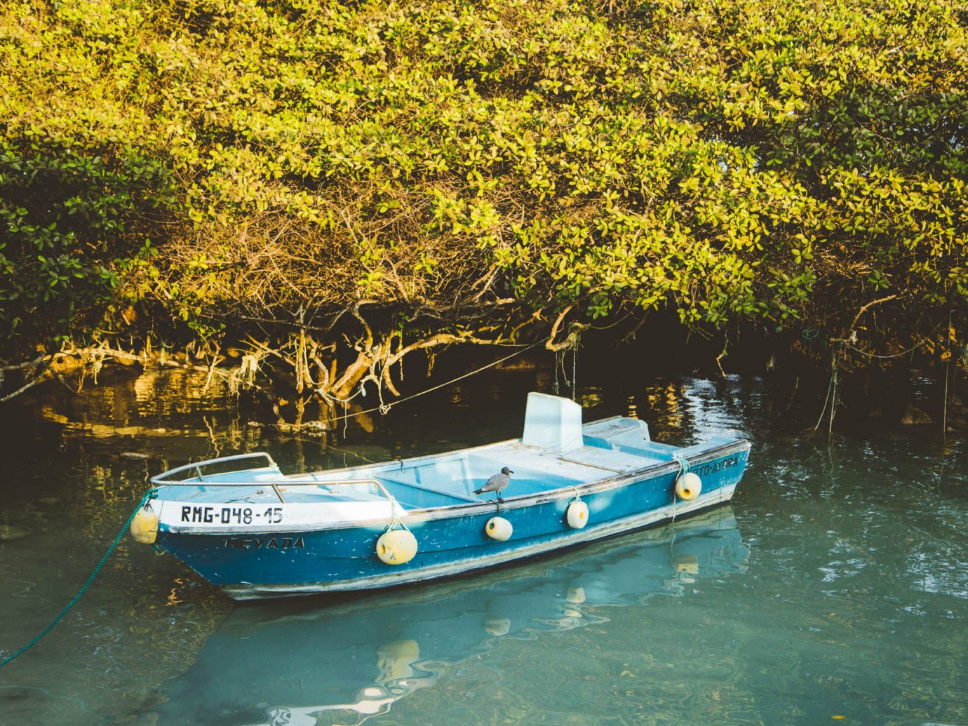 Boat calm Greenery Lake Ocean remote serene south america Trip Ideas water outdoor vehicle River watercraft rowing watercraft waterway reflection Sea
