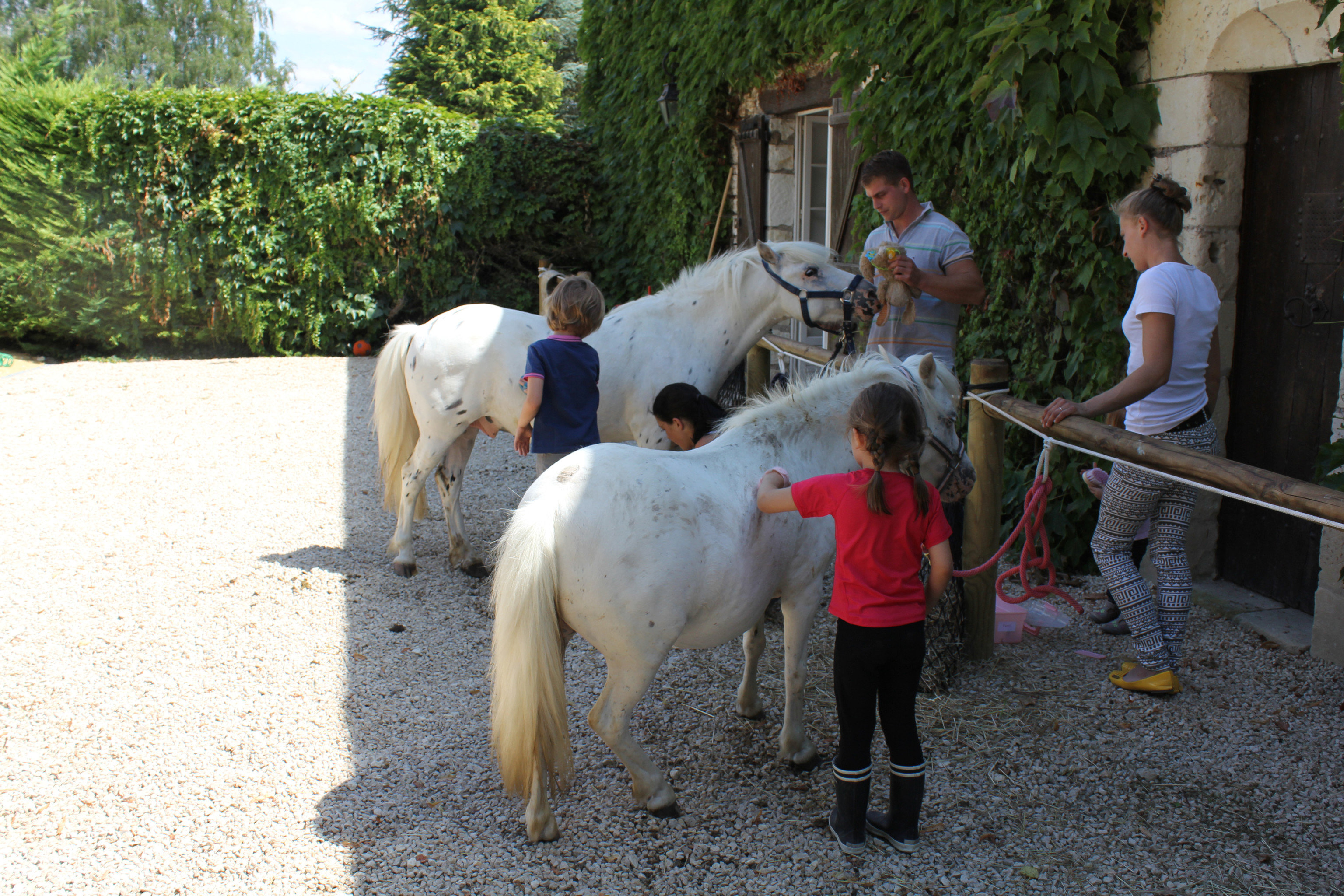 tree ground animal mammal horse standing Farm horse like mammal