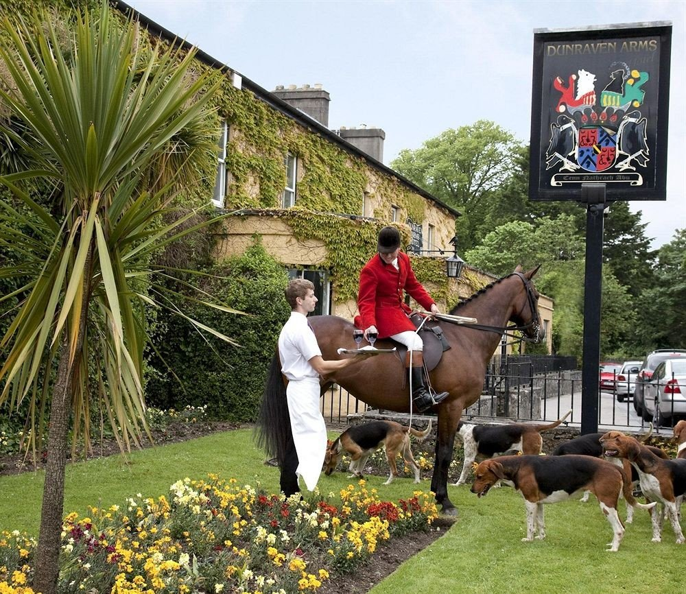 grass tree man equestrianism eventing equestrian sport horse like mammal english riding Farm animal sports