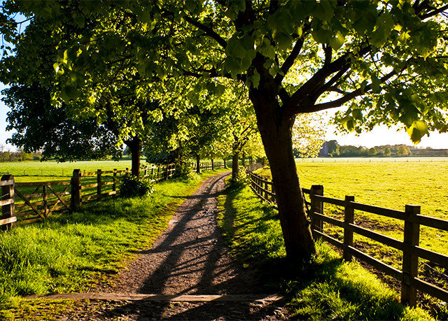 tree grass Nature Fence green field plant leaf season woodland morning autumn sunlight woody plant rural area flower landscape park Farm bench lush pasture