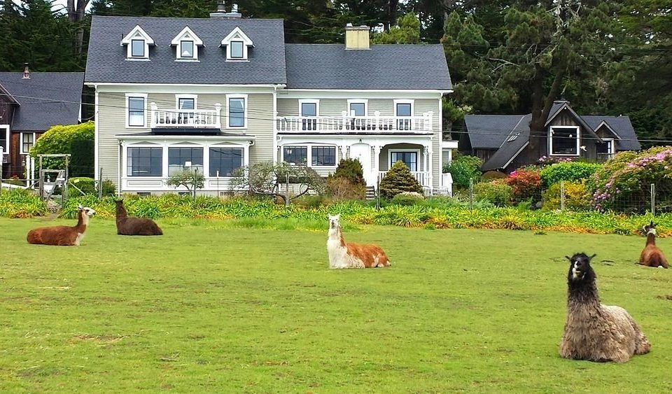 grass building tree house field animal mammal green lawn home yard Farm backyard rural area Garden pasture flower llama grassy lush