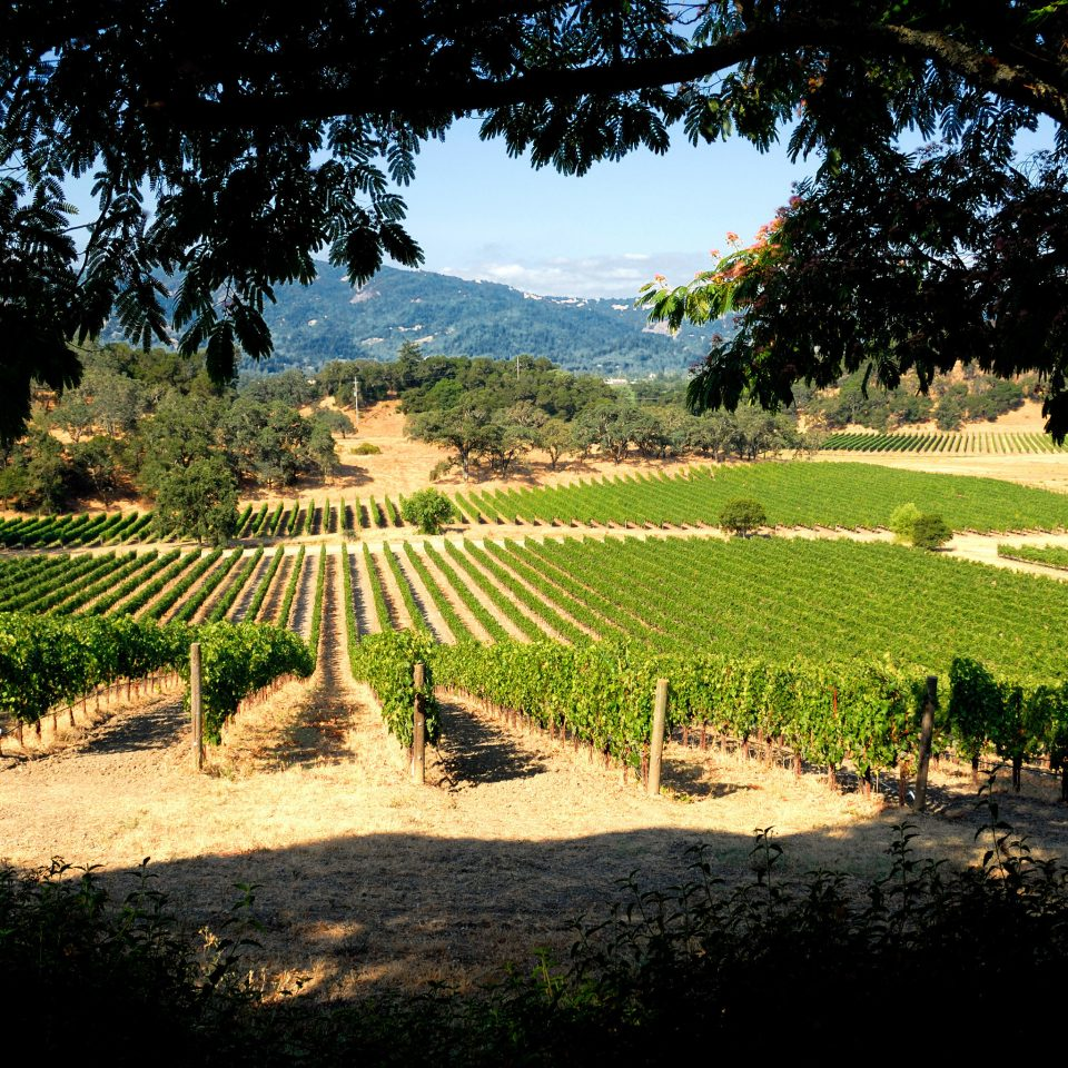 Grounds Vineyard Wine-Tasting Winery tree grass agriculture Nature green botany field Garden rural area plantation leaf landscape flower arecales plant Farm lawn shade day