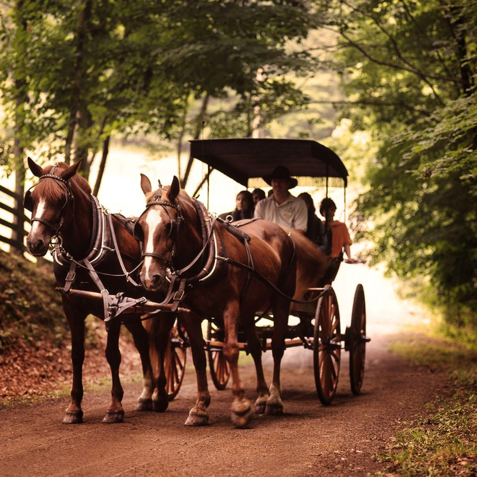 Natural wonders Nature Outdoor Activities Outdoors Scenic views tree horse ground horse and buggy pulling carriage grass transport vehicle pack animal drawn cart horse like mammal horse-drawn vehicle rural area path Farm ox Ranch pulled dirt wooded