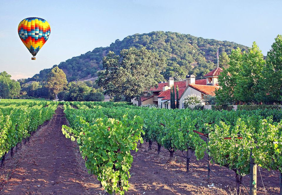 Nature Outdoors Vineyard tree agriculture balloon ground aircraft transport vehicle field Farm