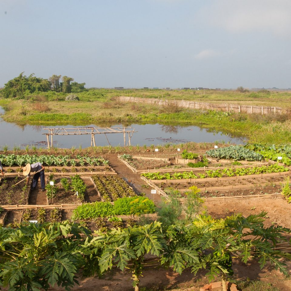 grass habitat agriculture Nature natural environment ecosystem field soil rural area wetland Village Farm waterway paddy field lush