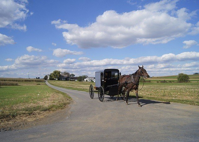 grass sky road transport pasture field horse-drawn vehicle street agriculture prairie plain rural area Farm landscape vehicle road trip Ranch amish drawn dirt