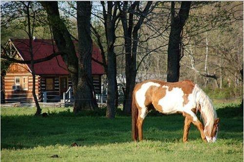 grass tree horse field grazing pasture mammal mare animal horse like mammal stallion mustang horse meadow Ranch Farm pack animal lush