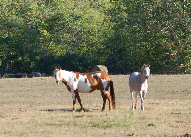 tree horse grass animal pasture mare field mammal fauna herd natural environment ecosystem grazing grassland mustang horse standing horse like mammal Wildlife pack animal prairie foal meadow rural area landscape Ranch colt Farm