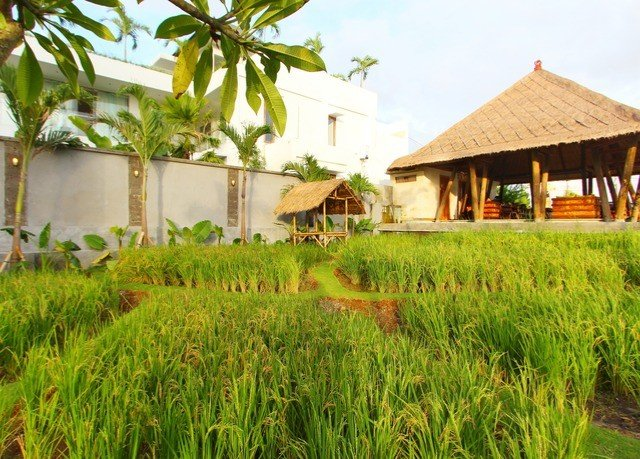 grass sky property house green Resort agriculture paddy field plant rural area plantation Village eco hotel cottage grass family lawn Farm lush hillside