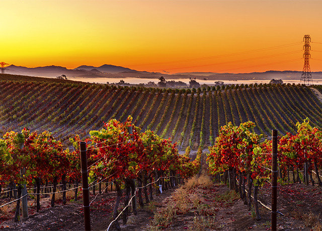 sky agriculture Vineyard field flower outdoor structure Sunset autumn sunlight Farm orange lined colorful line