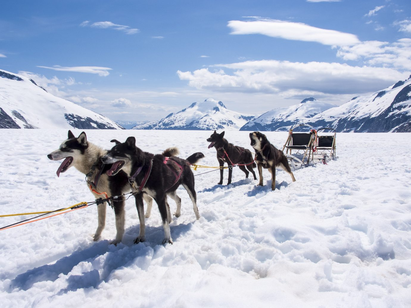 Trip Ideas snow outdoor sky transport skiing dog sled mushing vehicle land vehicle sled Winter sled dog racing covered mountain cross sled dog arctic dog like mammal day