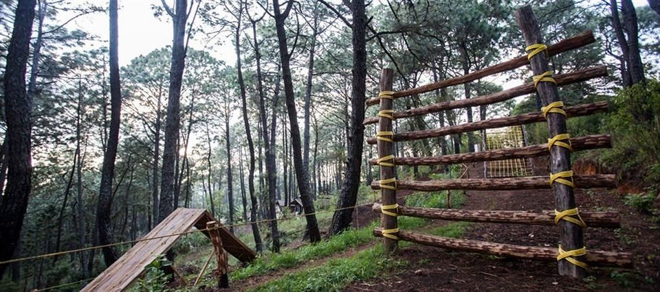 tree habitat wooden building wilderness natural environment Forest ecosystem trail woodland Fence woody plant park temperate coniferous forest Jungle biome rainforest wooded