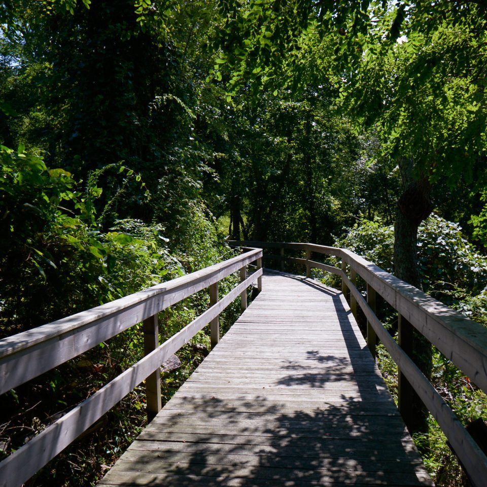 tree habitat Nature bridge green natural environment park building Forest River leaf walkway woodland rainforest Jungle sunlight waterway flower Fence wooded