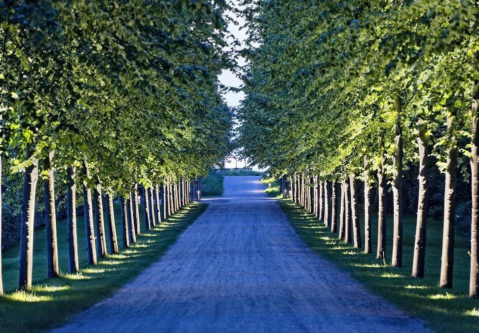 tree grass green plant lined Fence woody plant leaf path agriculture woodland flower park sunlight row autumn shrub lawn aisle Garden walkway wooded line surrounded