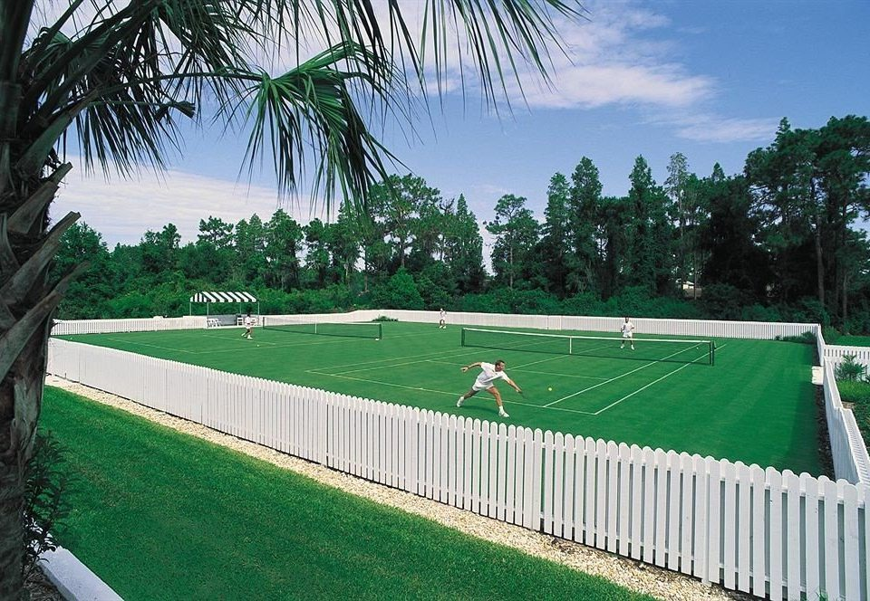 grass tree sky structure green sport venue swimming pool stadium lawn arecales Fence Garden palm lush