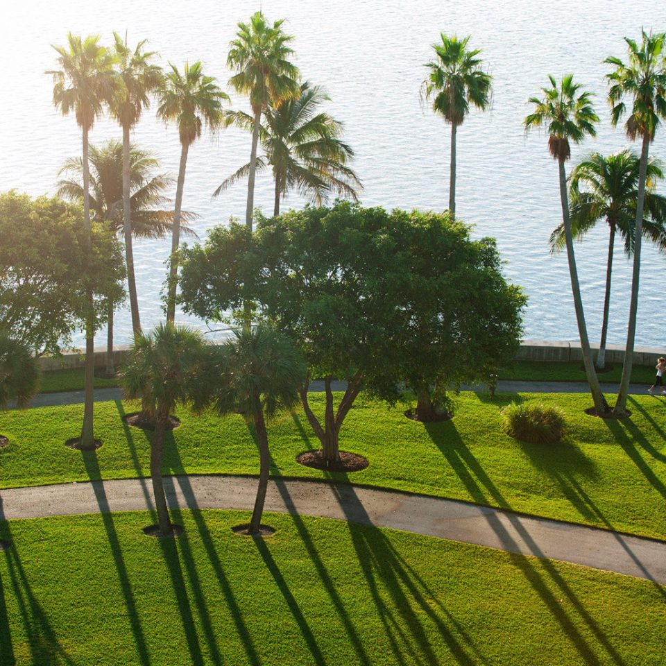 Grounds Waterfront grass Fence tree green ecosystem plant flora palm family botany flower arecales woody plant Garden lawn leaf grass family yard lush