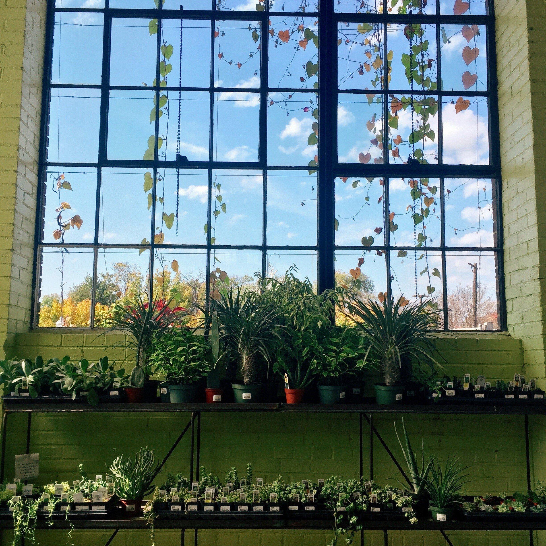 Trip Ideas building window tree urban area Architecture facade estate interior design flower glass window covering