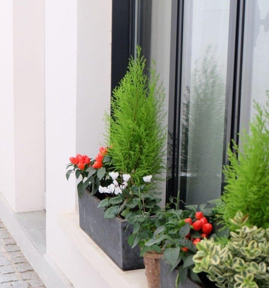 plant flower floristry flower arranging floral design flowerpot outdoor structure