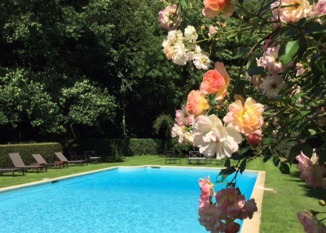 tree flower plant floristry