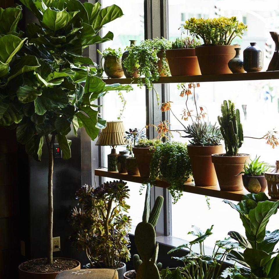 tree plant houseplant flower flowerpot outdoor structure herb