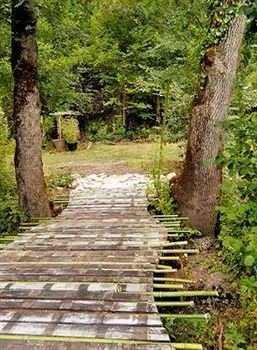 tree bench ground habitat park walkway wooden trail woodland Forest wooded plant empty surrounded