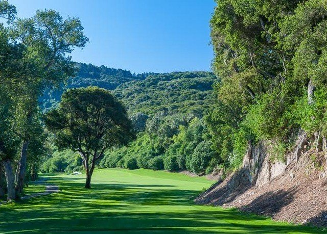 tree grass structure vegetation green ecosystem grassland sport venue plant golf course outdoor recreation meadow golf club sports Forest lush wooded