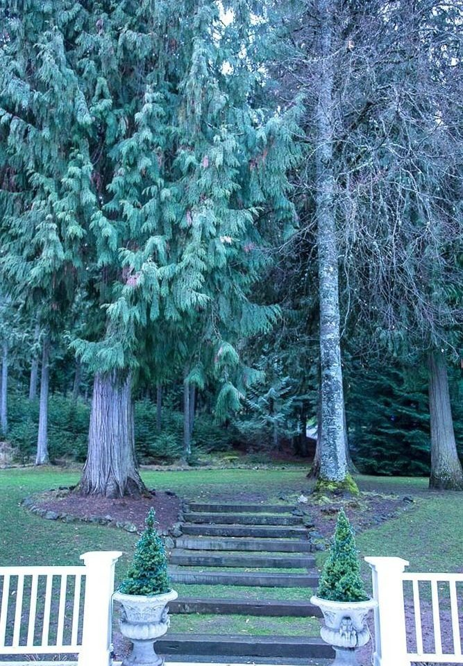 tree plant ecosystem woody plant park woodland Forest biome spruce fir Garden flower temperate coniferous forest surrounded