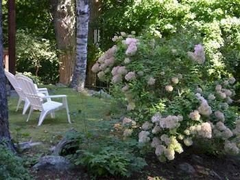 tree flower plant land plant hydrangea flowering plant hydrangeaceae shrub Forest Garden stone
