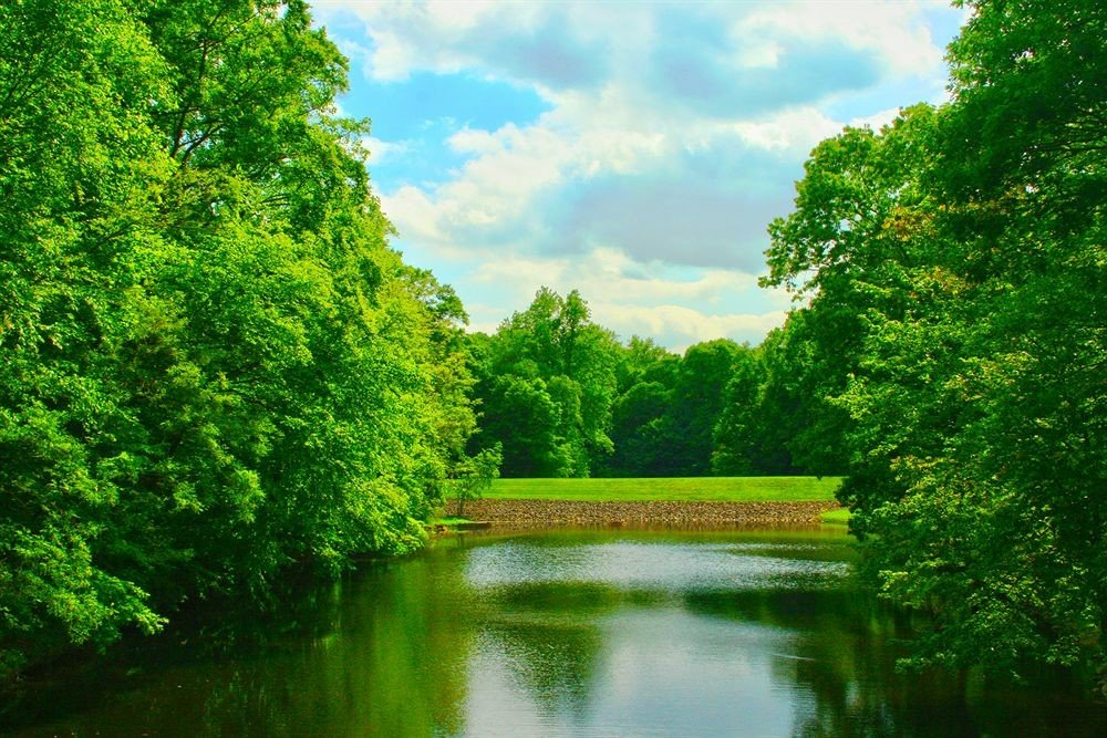 Garden Grounds Waterfront tree water habitat Nature green River natural environment Lake botany grass plant leaf pond Forest woody plant waterway woodland rural area landscape flower sunlight autumn meadow park surrounded