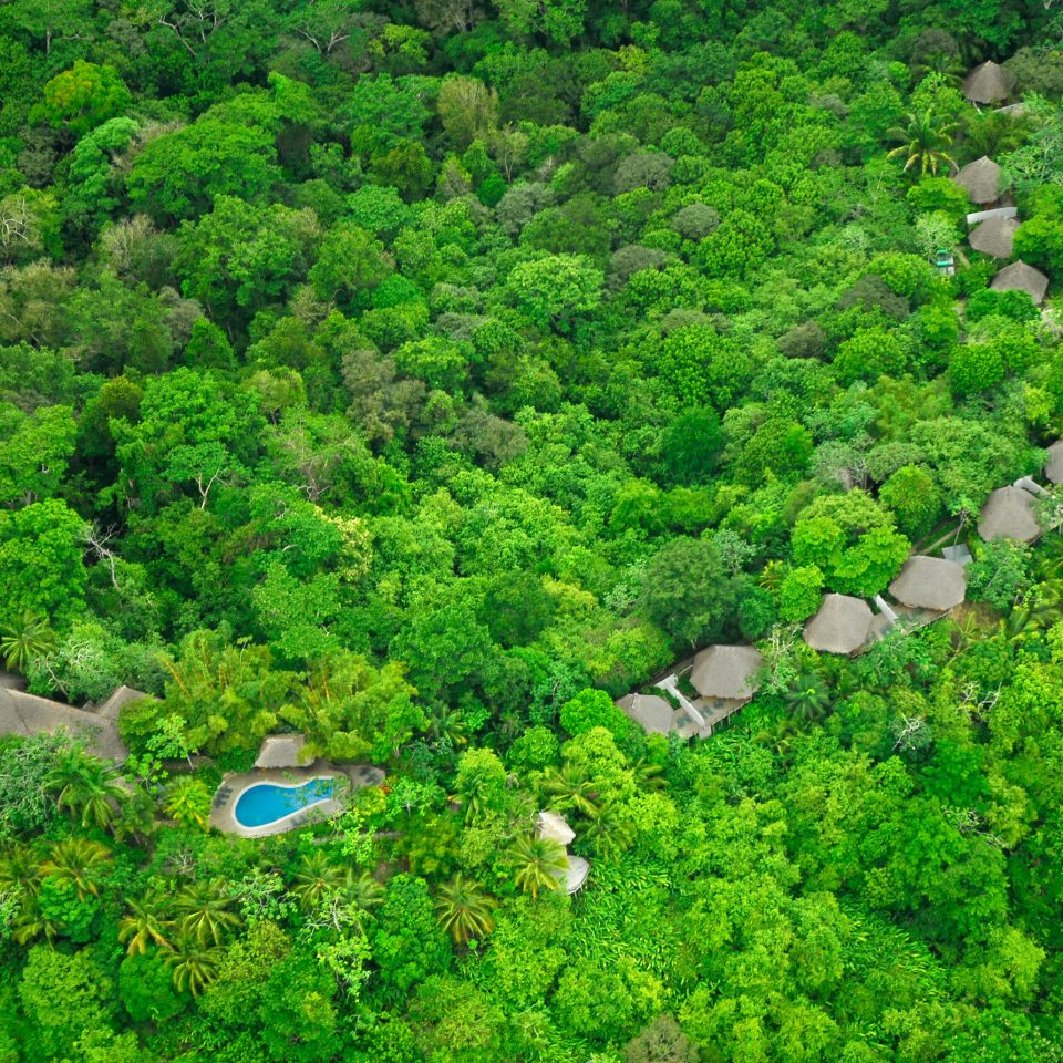 tree habitat vegetation nature reserve natural environment Forest green rainforest ecosystem old growth forest Jungle aerial photography woodland biome soil meadow plateau flower plantation Garden lush