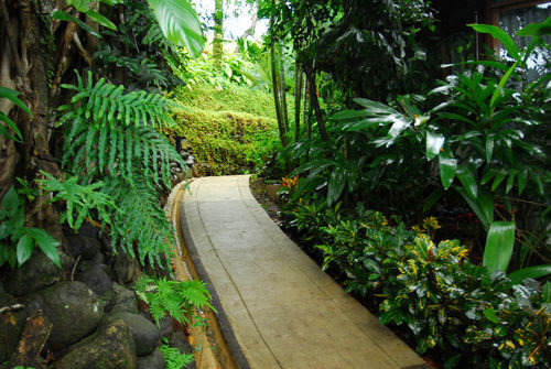 tree habitat plant vegetation green natural environment rainforest botany Garden walkway Jungle Forest yard backyard arecales botanical garden flower plantation tropics stone curb