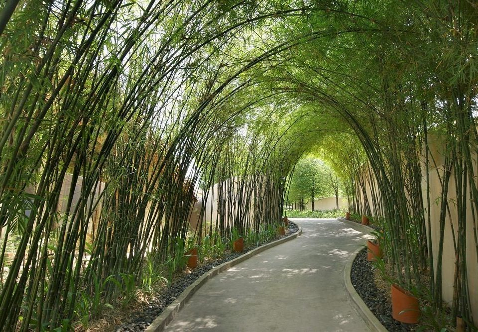 tree green plant natural environment botany grass woodland woody plant Forest arecales leaf rural area sunlight waterway Jungle Garden bamboo flower plantation walkway