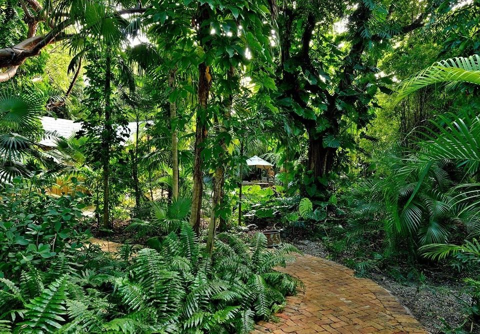 tree habitat vegetation plant rainforest natural environment Forest old growth forest ecosystem flora woodland botany Jungle temperate broadleaf and mixed forest land plant arecales conifer Garden biome temperate coniferous forest tropics flower botanical garden plantation fern leaf surrounded lush wooded