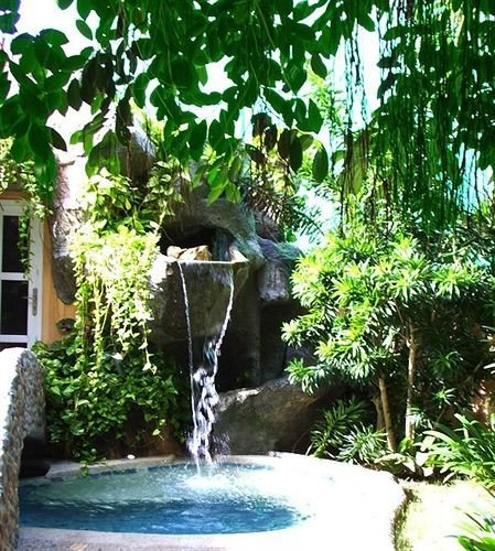 tree plant botany swimming pool water feature Jungle backyard Garden rainforest pond vessel yard botanical garden Forest surrounded