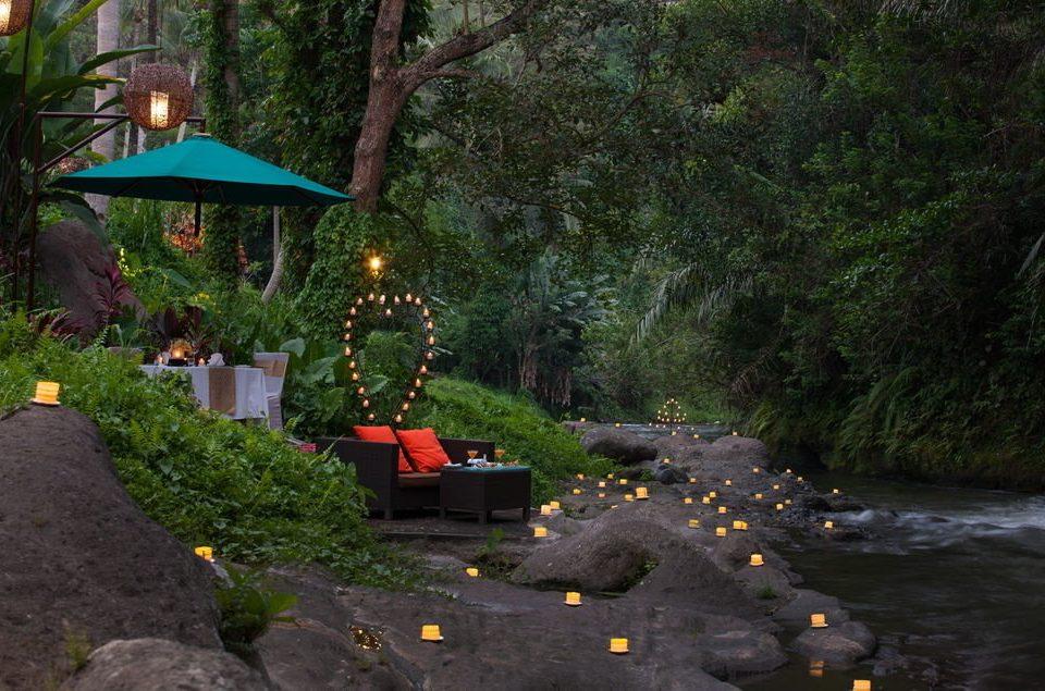 tree Jungle Forest screenshot backyard landscape lighting Garden plant