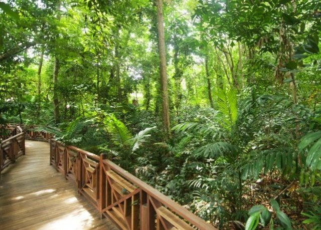 tree habitat vegetation natural environment rainforest ecosystem Forest Jungle old growth forest wooden plantation woodland biome plant Garden surrounded walkway wooded