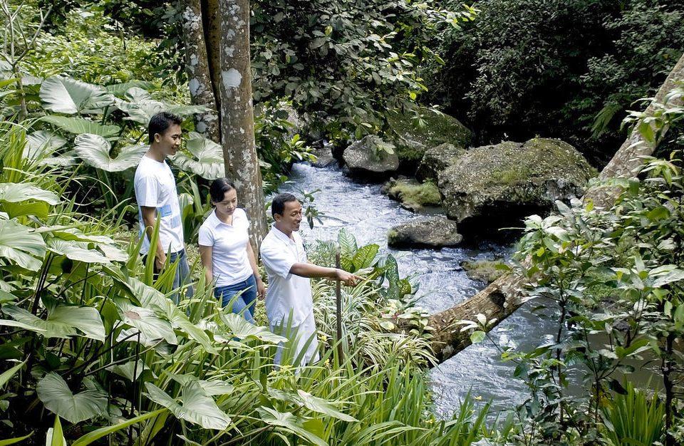 tree man botany flower rainforest plant Forest woodland Garden Jungle botanical garden stream plantation
