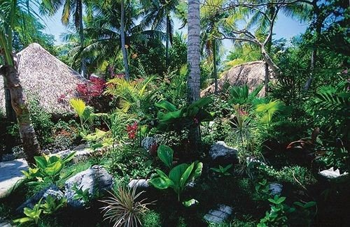 tree habitat plant vegetation rainforest natural environment ecosystem Garden flora botany Jungle Forest tropics conifer old growth forest flower palm surrounded