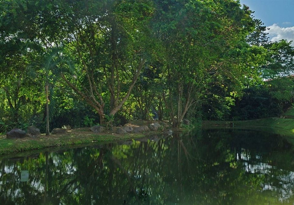 tree habitat water vegetation Nature green bayou natural environment ecosystem pond botany River Forest woody plant Jungle rainforest leaf wetland Garden waterway fish pond Lake flower swamp