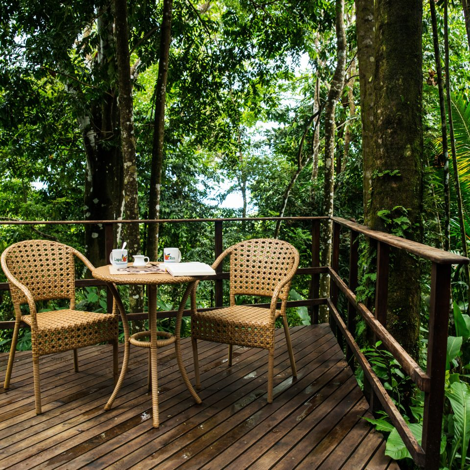 Jungle Lounge Luxury Tropical tree chair habitat natural environment Forest backyard woodland outdoor structure Garden rainforest cottage set wooded