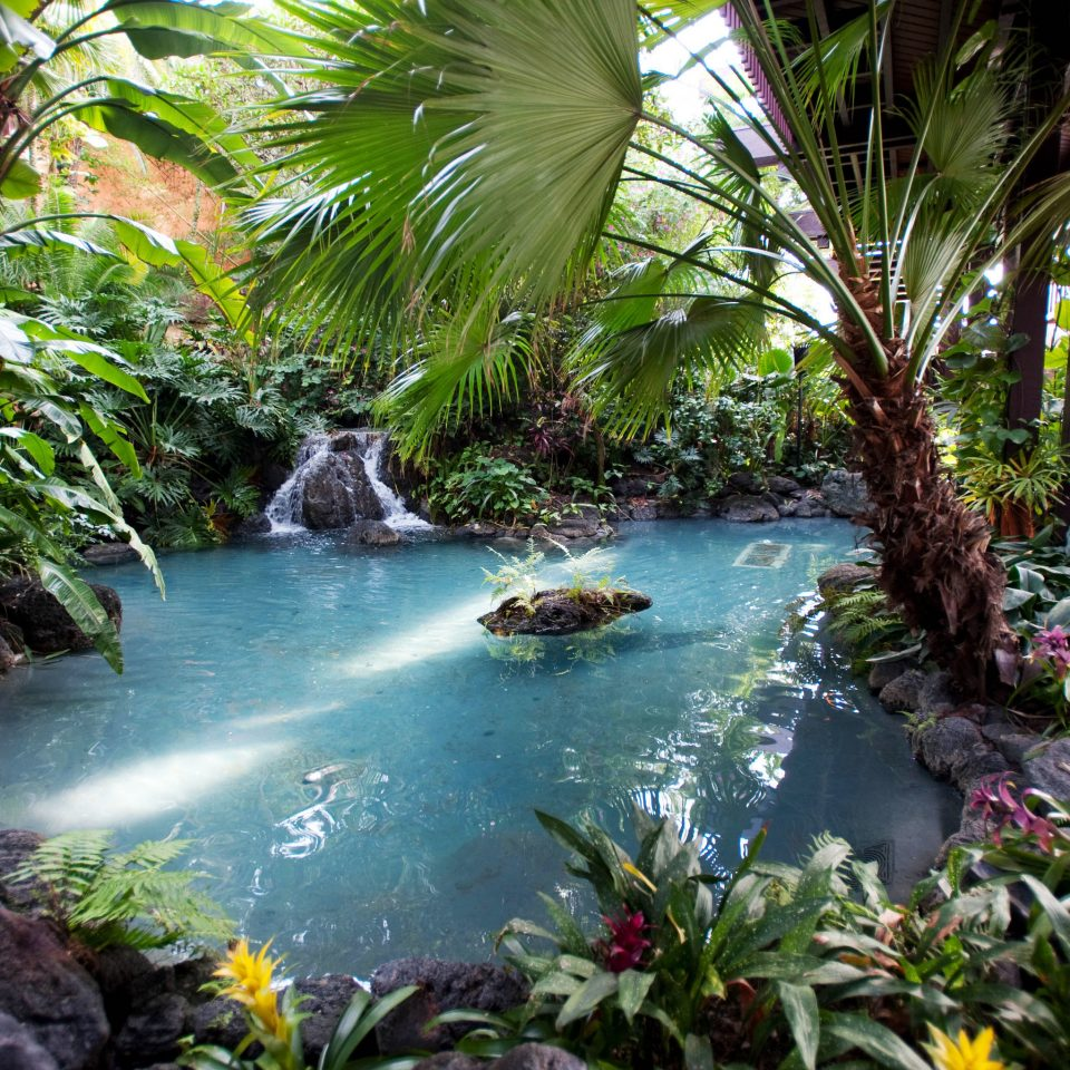 tree habitat plant vegetation Nature rainforest botany tropics Jungle arecales Forest Garden flower water feature swimming pool botanical garden surrounded