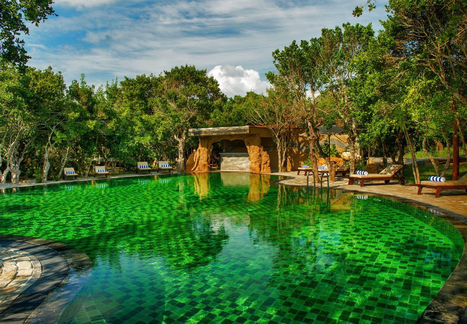 tree water pond swimming pool Nature green Resort River Garden backyard Jungle flower botanical garden surrounded Forest wooded