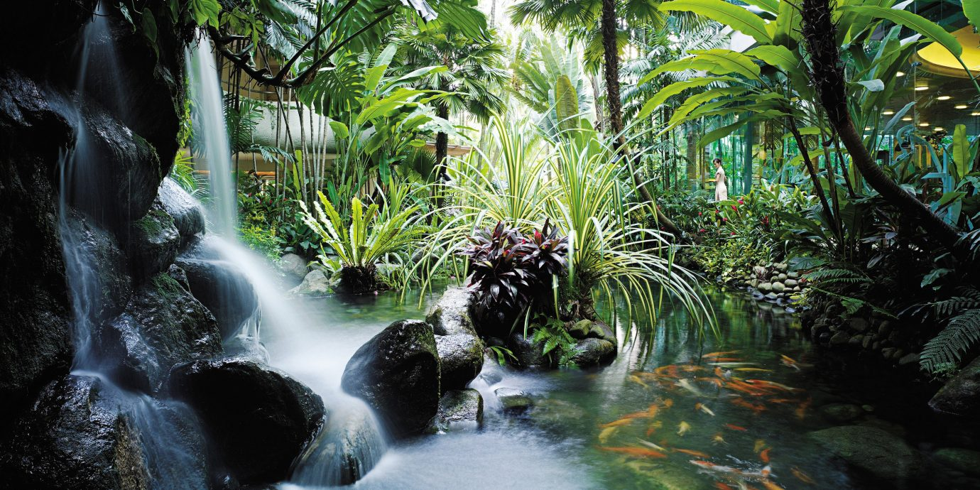 Jungle River Waterfall tree Nature habitat water vegetation natural environment rainforest Forest botany tropics water feature stream arecales flower Garden surrounded