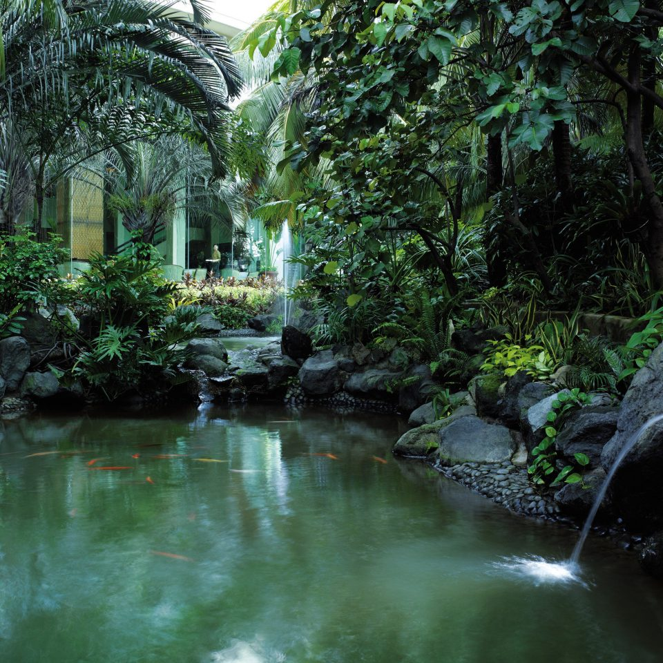 Garden Nature Resort Waterfall tree habitat green vegetation water natural environment watercourse River Forest rainforest botany stream Jungle woodland water feature landscape flower pond tropics surrounded
