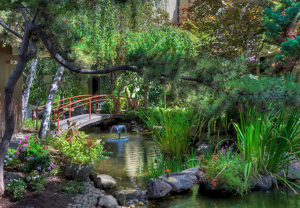 tree water Garden watercourse pond botany River flower Nature stream botanical garden plant waterway woodland Jungle backyard fish pond water feature surrounded Forest bushes wooded